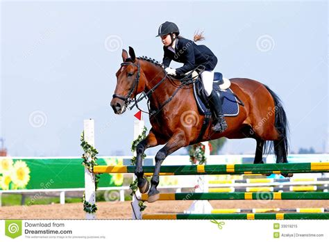 equestrian sport royalty free stock photo image 33019215