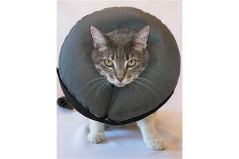 donut collar the different types of elizabethan collars or e collars for cats pets potential