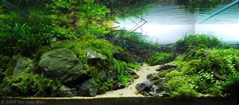 ideas aquascaping  stone  wood grass awesome