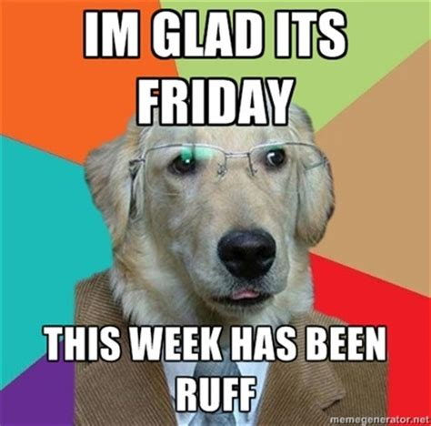 Dog Friday Meme - pin by miss oakley on miss oakley s life board pinterest
