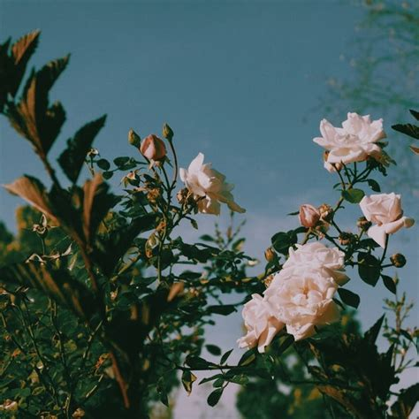 flower wallpaper aesthetic aesthetic color flowers tumblr image 4521735 by