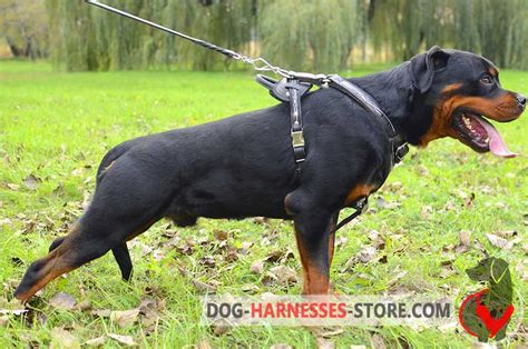 rottweiler strong walking leather bulldog harness h1 1092 harness harness