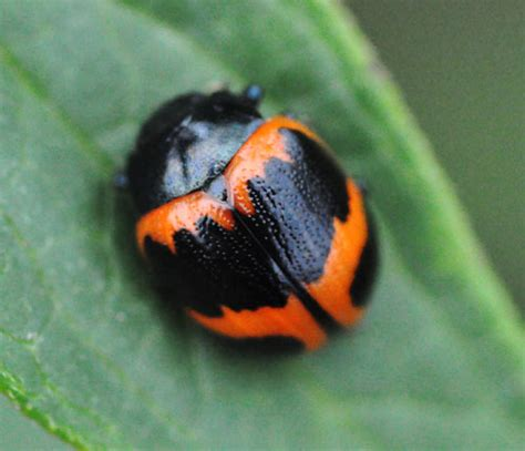 colorful bugs colorful bug www pixshark images galleries with a