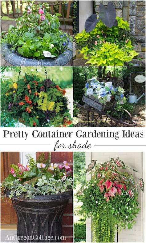 Design For Potted Plants For Shade Ideas 12 Beautiful Container Gardening Ideas For Shade