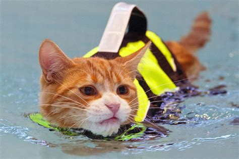 Cat Jaket Cat Fish Cat And Fish Jacket Hoodie cats might be for hating water but this soggy