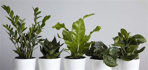 plants for apartments best indoor plants for hong kong apartments spacedout