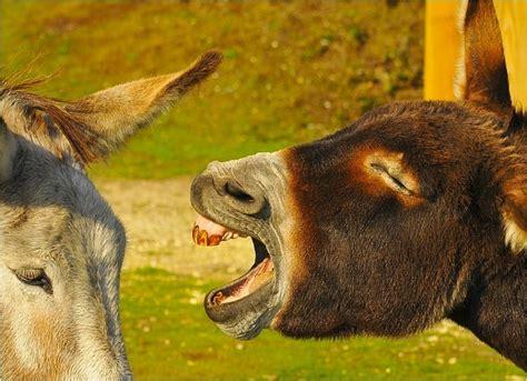 Donkey Meme - kvetch donkey meme generator captionator caption generator frabz