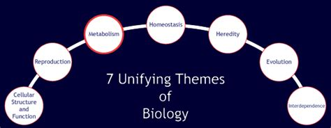 themes of biology quizlet macromolecules
