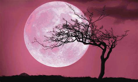 pink moon april 2017 pink moon 2017 is the april full moon pink science