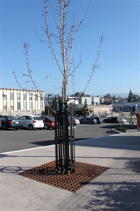 best seattle tree lot 17 best images about tree filter pits on technology search and trees