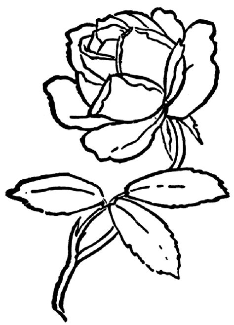 rose bush coloring page a cartoon rose cliparts co