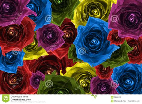 32896 Black White Yellow Collage S M L Top mix collage of flowers rainbow background stock photo