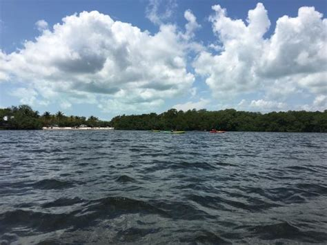 glass bottom boat tours new braunfels photo2 jpg picture of john pennek coral reef state