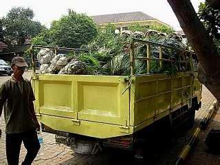 Harga Pot Anggrek Tanah Liat toko lestari