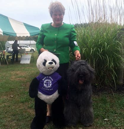 lorain county kennel lorain county kennel club sunday august 14 2016 canine chronicle