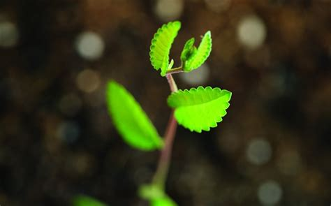 imagenes verdes hd imagenes hd verdes imagui