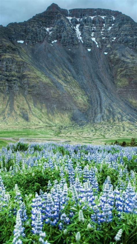 flower valley 1280 800 wallpaper wallpaper valley of flowers 5k 4k wallpaper himalayas