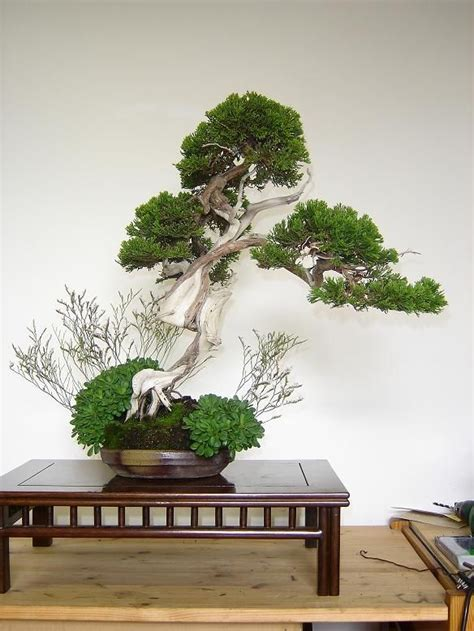 cherry tree xenia 1000 images about mame bonsai penjing niwaki on