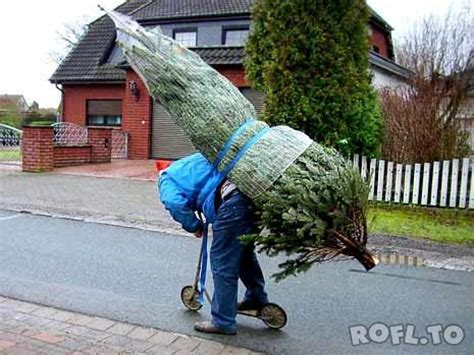 how to transport your christmas tree dad blog uk