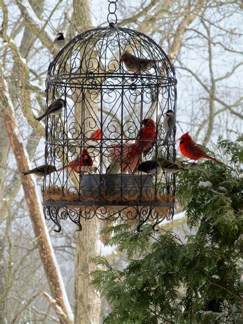 love our beautiful cardinals what a beautiful bird