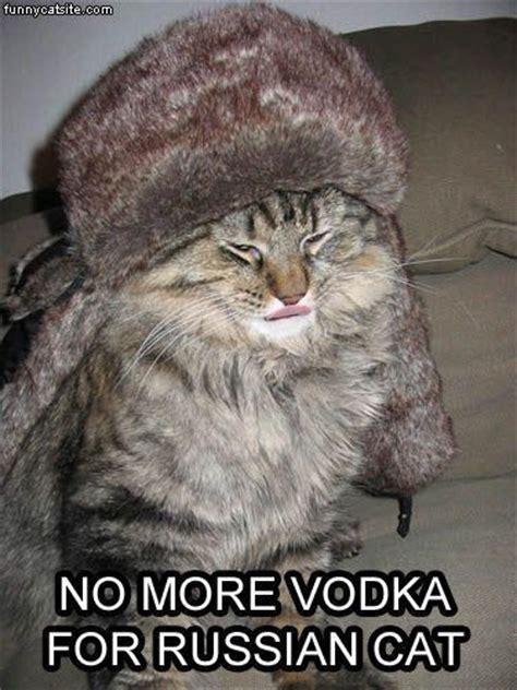 Russian Cat Meme - russian cat