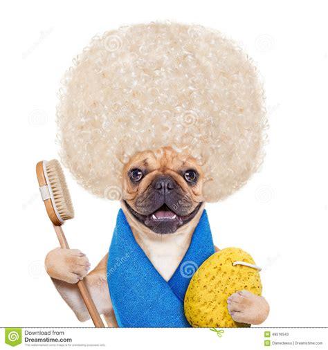 wellness puppy wellness stock photo image 48516543