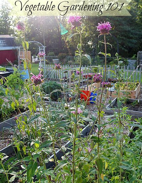 vegetable garden basics how to start a vegetable garden