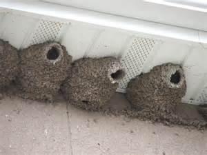 New Hampshire Barns Swallow Control Mud Swallows Allstate Animal Control
