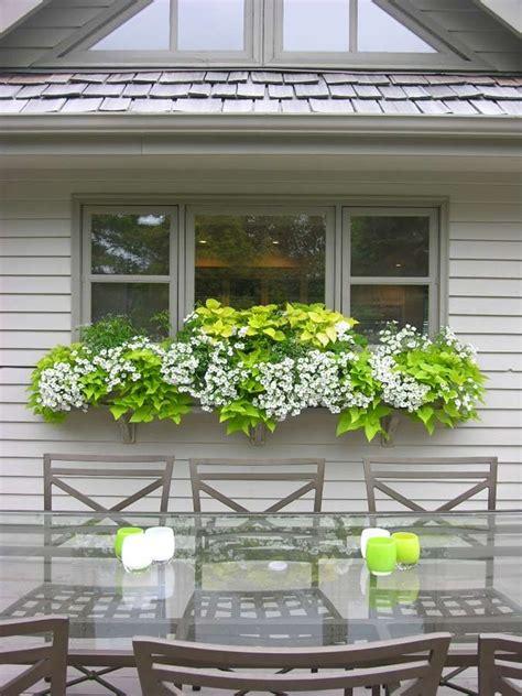 white window flower boxes pretty bright green white window box potato vine