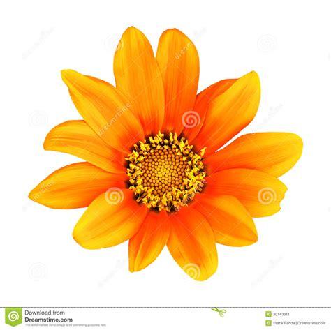 il fiore bianco pittura isolata hdr arancio fiore della gerbera