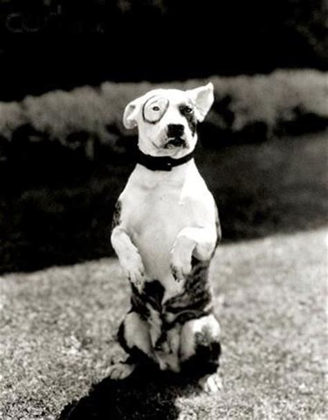 petey the petey the from the rascals yes he was a pit bull pitties and