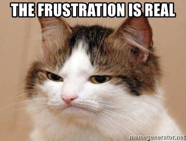 frustration  real frustrated cat meme generator