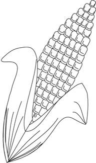 corn color page corn field coloring pages