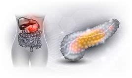 corpo umano organi interni milza organi interni fegato pancreas milza illustrazione