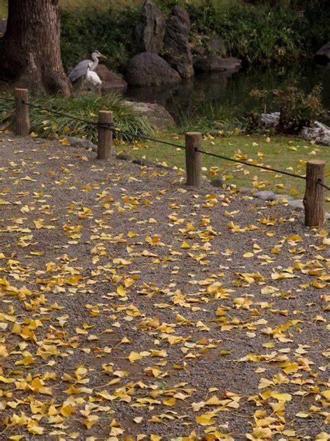 late fall kiyosumi gardens tokyo taken aylin