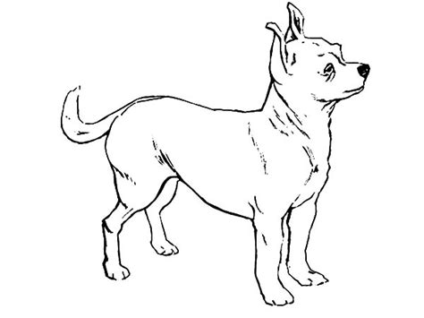 coloring pages chihuahua dogs chihuahua dog coloring pages coloring pages