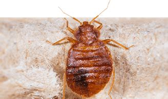 terminix powerful pest termite solutions defenders