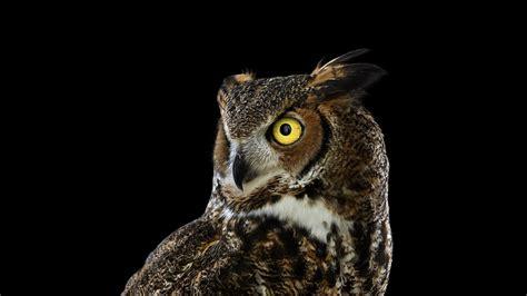 owl background photography animals birds owl simple background