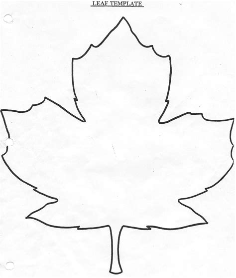 template leaves large leaf template coloring home