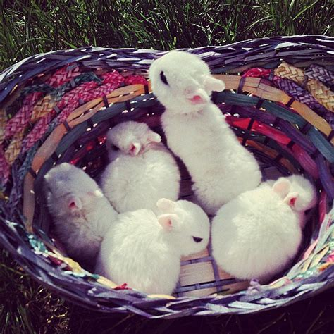 Large Home Decor A Group Of Bunnies Is Called A Fluffle 13 Facts That