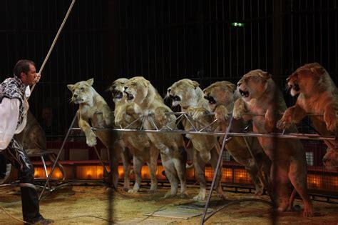 imagenes de animales jpeg holanda prohibir 225 los circos con animales schnauzi com