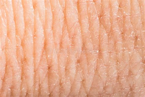 macro of clean healthy texture human skin stock photo 497410486 up human skin macro epidermis stock photo image of detailed 36429614