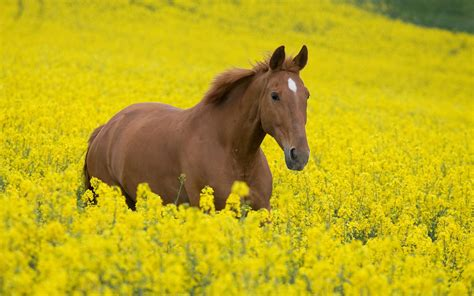 Horse Girl Field #7007534
