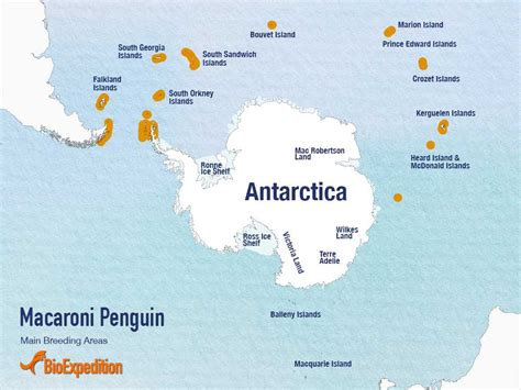 where do penguins live map macaroni penguin penguin facts and information