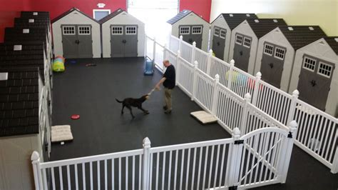 day care for puppies why daycare owners are choosing wambam fence wambam fence