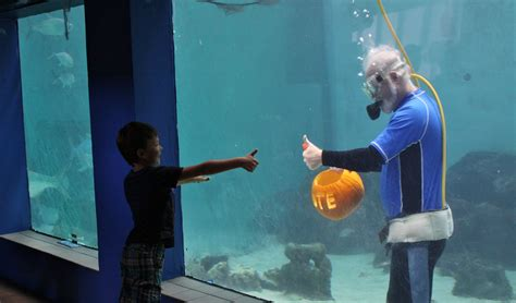 Mote Kayu Mote Lines Pum Pkin mote president carves pumpkin underwater to prepare for mote s of fish fright