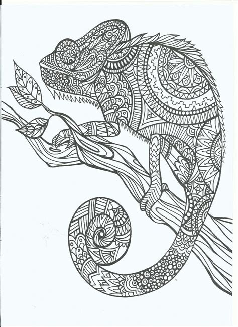 Coloring Pages For Adults Chameleon | cameleon adult coloring therapy free inexpensive
