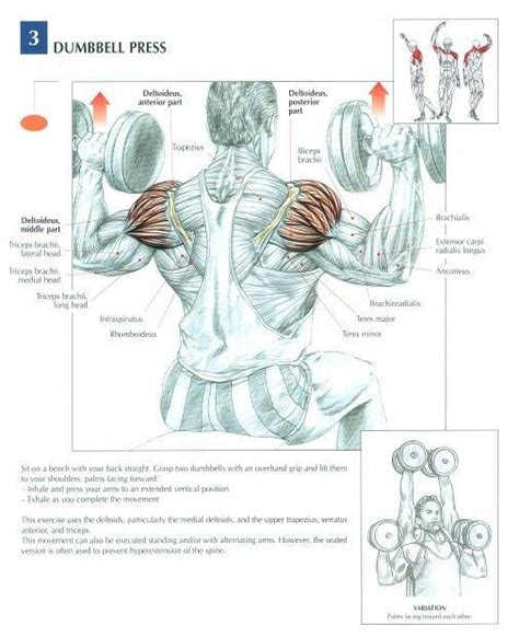 kettlebell swing anatomy muscles worked by bent over row google search body