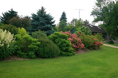 the mature size of the shrubs gives the yard a nice border and privacy from others jodie