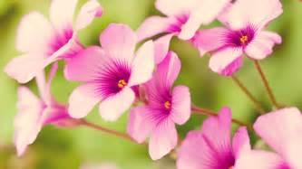 Flower Spring by Spring Flower Wallpaper 702489